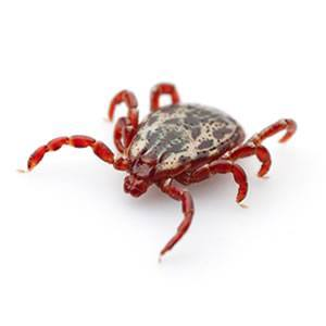 Our Services Insight Pest Solutions