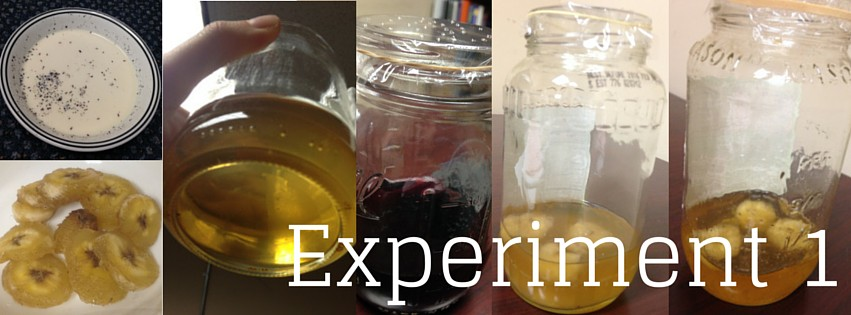 Fruit fly trap tests, first experiment