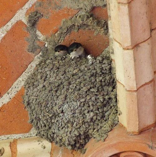 baby birds in nest on brick structure