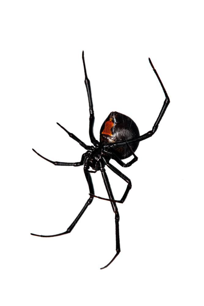 It's just a photo of Adaptable Drawing Of Spiders