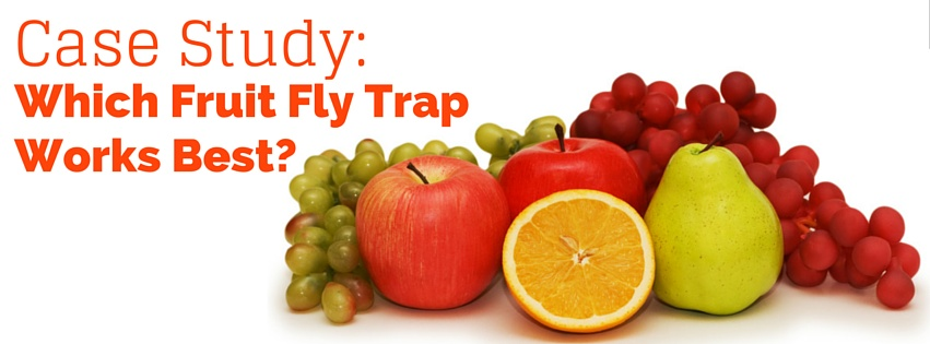 How To Get Rid Of Fruit Flies Which Trap Is Best Case Study
