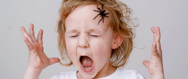 Spider Prevention Checklist