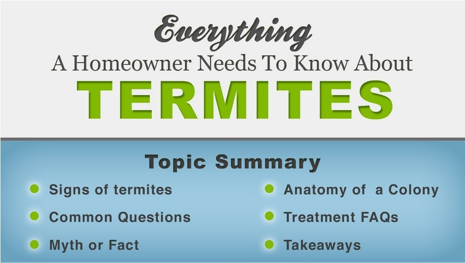 Everything you Need to Know About Termites - Part 2 - Insight Pest ...