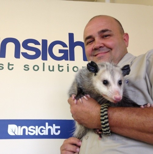 Insight Pest employee holding a possum