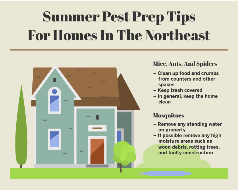 Summer Pest Prep Tips Northeast